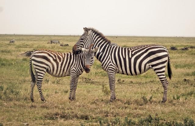 Serengeti National Park Shadows Of Africa - 9 things to see and do in serengeti national park