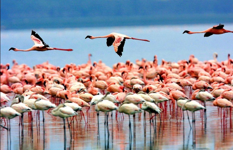 Lake Manyara with thousands of flamingos