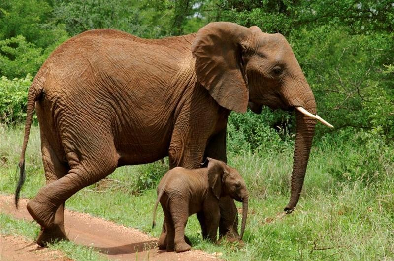 The park is known for its large elephant herds, which are among the largest in Tanzania