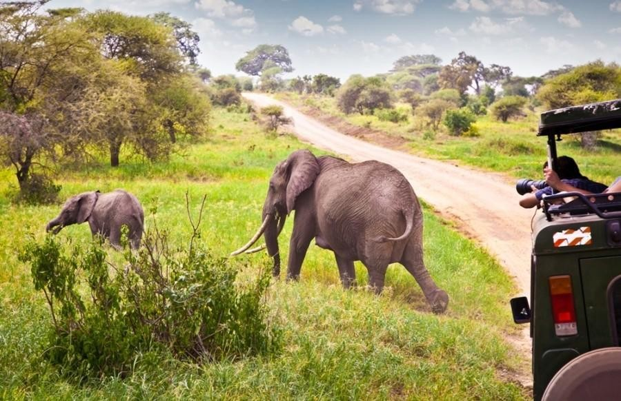 Safari from Zanzibar - Two Days in Tarangire