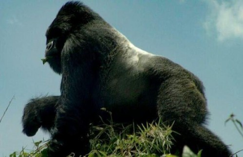 Ten Day Gorillas and Big Five Safari