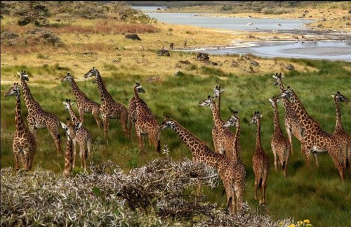 Safari to Arusha National Park - 1 day tour
