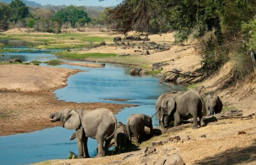 Ruaha & Selous By Air - 8 Day Flying Safari