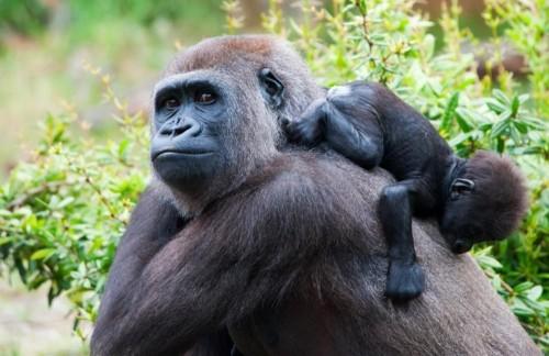 Three Day Mgahinga Gorillas & Culture Safari from Kigali
