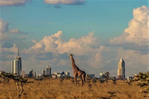 Half Day Tour to Nairobi National Park