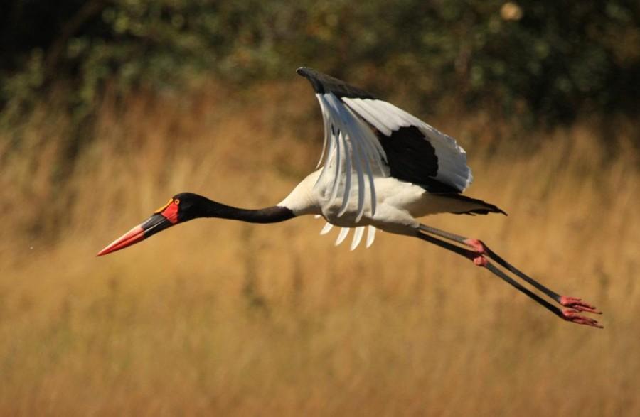 Bird watching in Rumbodo Island