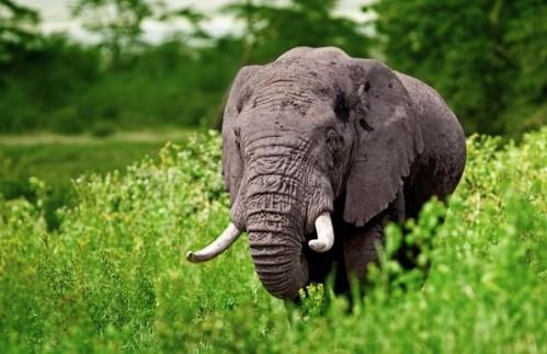 Safari iz Zanzibarja - 3 dnevni safari v park Tarangire, krater Ngorongor in jezero Manyara