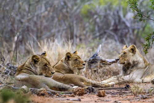 Nine Day Best of Zimbabwe Safari