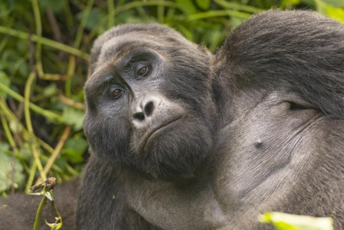 Three Day Uganda Gorilla Experience