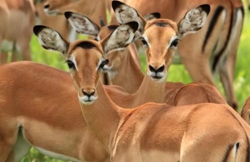 Južno tanzanijsko območje parka Mikumi & Selous - 6 dni