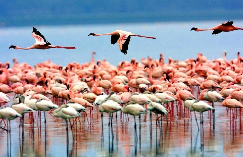 Lake Manyara National Park birds