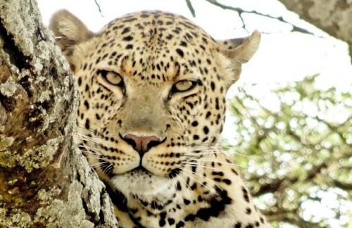 Safari po Tanzaniji- divijina in tradicija- 8 dni