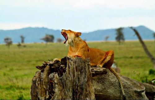 Tanzanijski safari -jezero Manyara in krater Ngorongoro - 2 dni