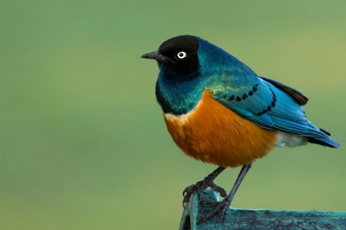 Bird watching in The Ngorongoro Conservation Area