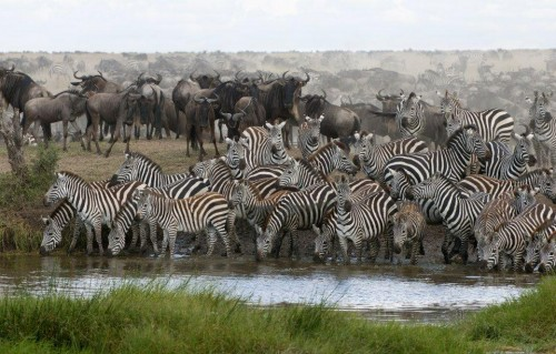 Wildebeest migration safari tours