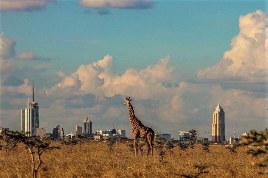 Пол Дня в Национальном Парке Найроби