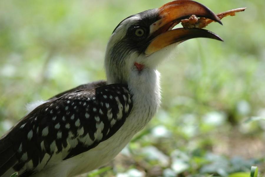 Bird watching in Tarangire National Park