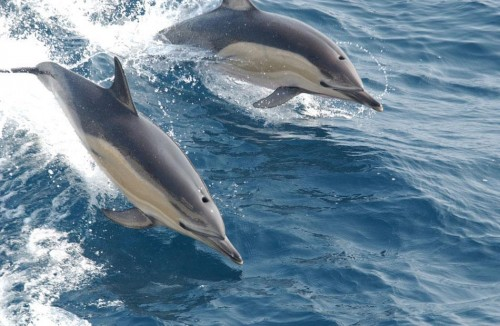 Дельфин Тур - Занзибар