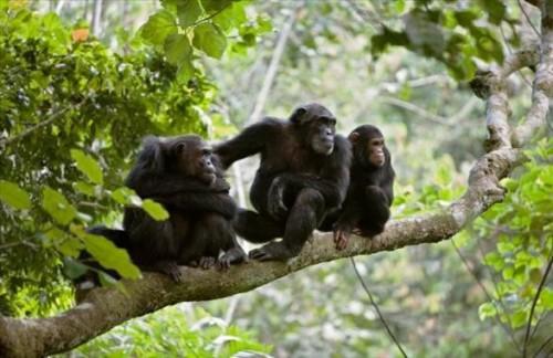 Поход к Шимпанзе в Гомбе - 5 Дней