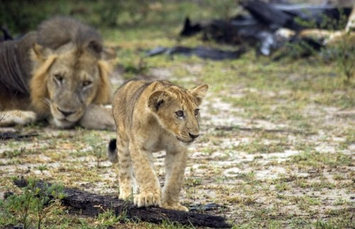 Four Day Kruger Safari Adventure