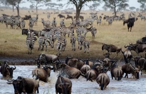 Восхитительное Летнее Сафари в Кении и Танзании  -  9 Дней