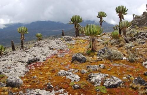 Национальный Парк Руаха
