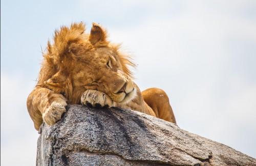 Eight Day Kenya and Tanzania Round Trip Safari