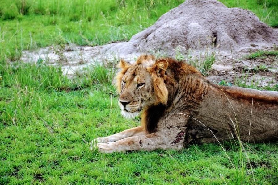Six Day Big Game and Gorillas Safari