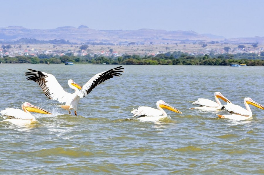 Lake Tana and Bahir Dar