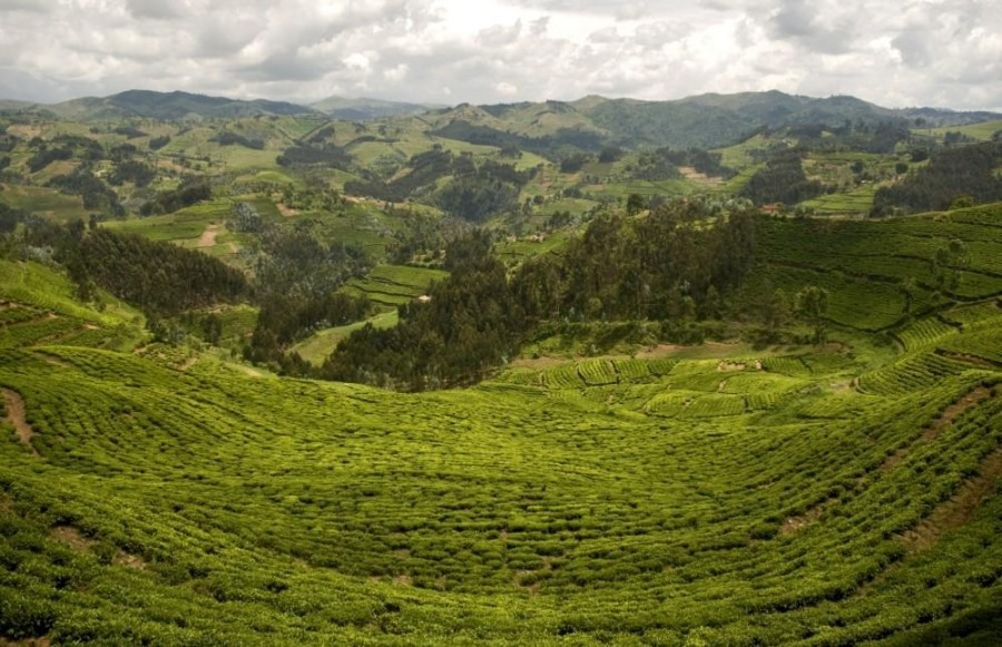 Dian Fossey Hike