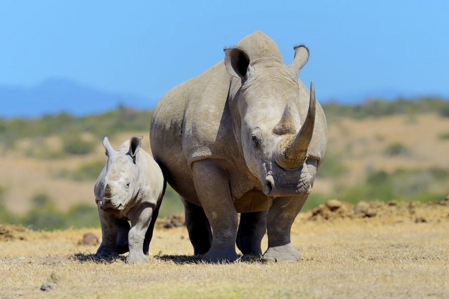 Two Day Safari to Ol Pejeta