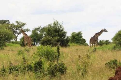 Gambela National Park