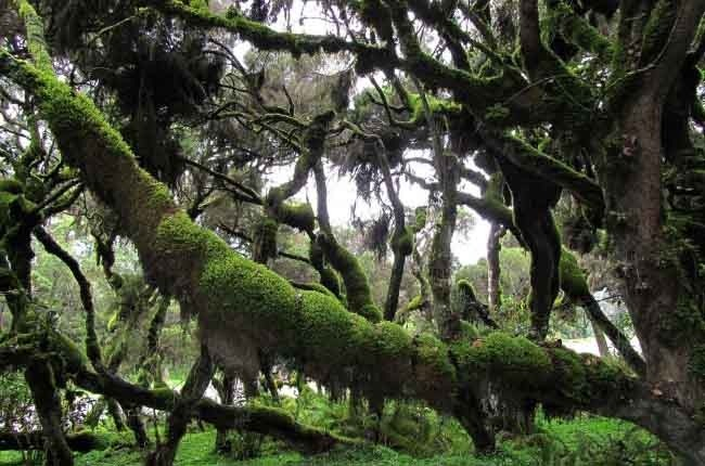 Bale Mountains National Park