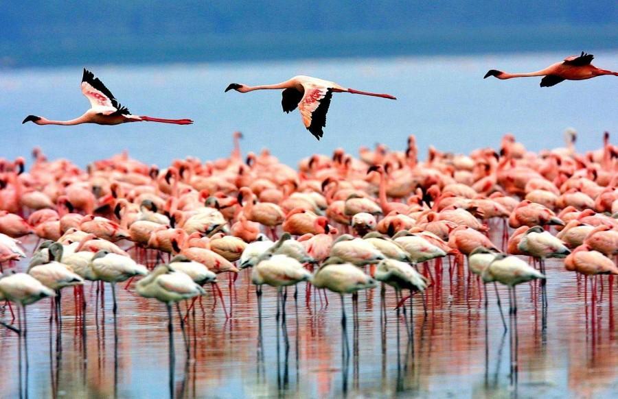 Lake Manyara National Park birds