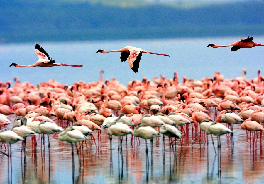 Bird Watching  in Lake Manyara National Park