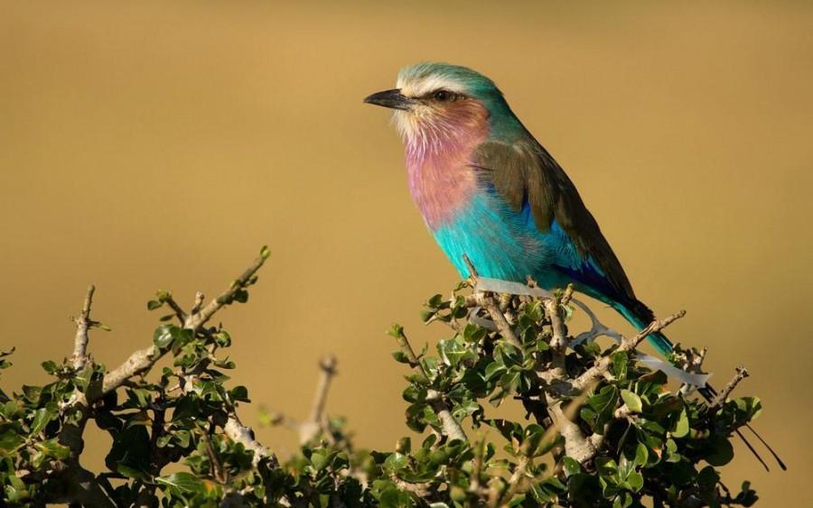 Bird watching in Serengeti National Park