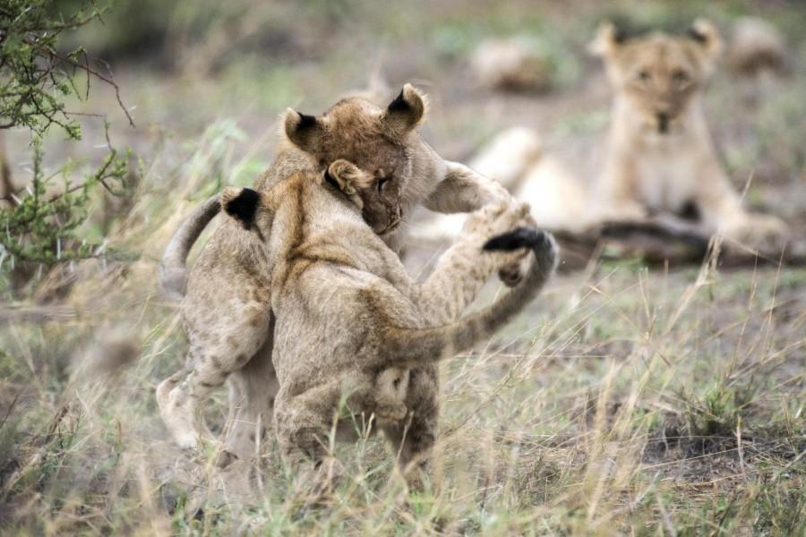 Pilanesberg National Reserve