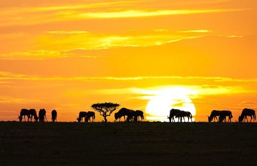 Eight Day Complete Tanzania Safari