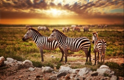 Safari from Zanzibar - Four Day Tanzania Express