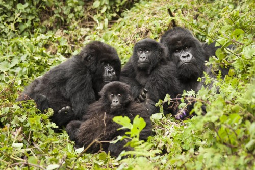 Four Day Gorillas and Culture Safari from Kigali