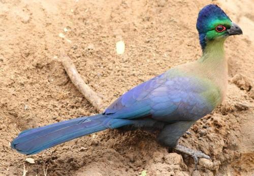 Bird watching in Ruaha National Park
