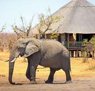 Camping Safaris in Zimbabwe