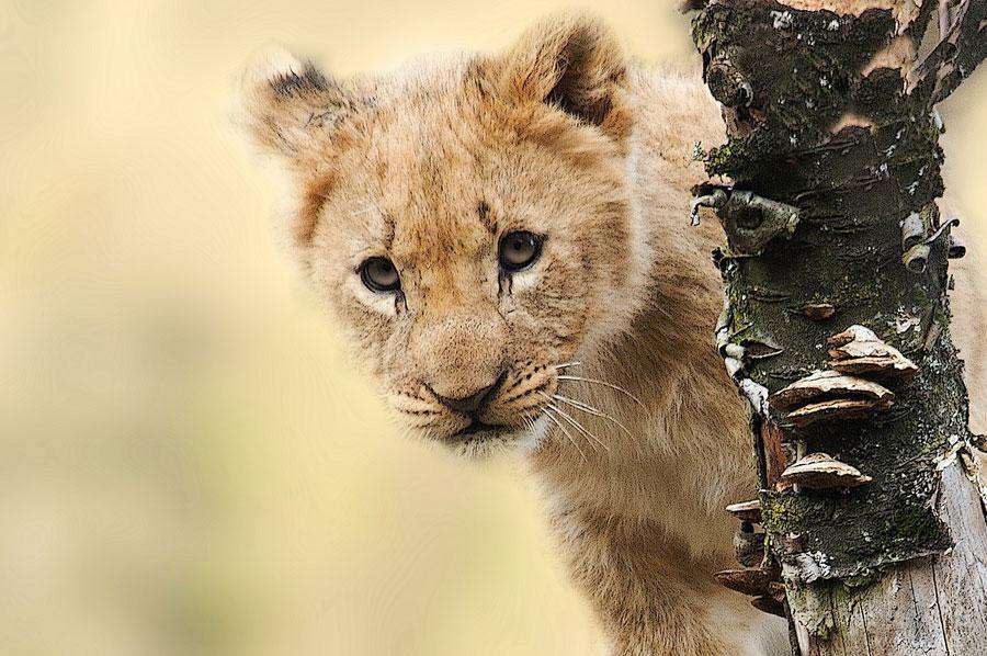 Wildlife of Tanzania